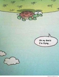 turtle, turtle meme, flying turtle