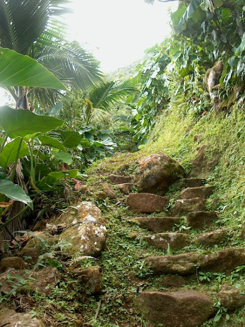 Some of the old steps leading up to the abandoned Temple of Winds